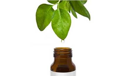 Tea Tree Oil Add just a few drops to your bottle of vegan shampoo and it could cure or greatly reduce your dandruff. Studies show that shampoos that are 5% Tea Tree Oil have a dramatic effect on dandruff