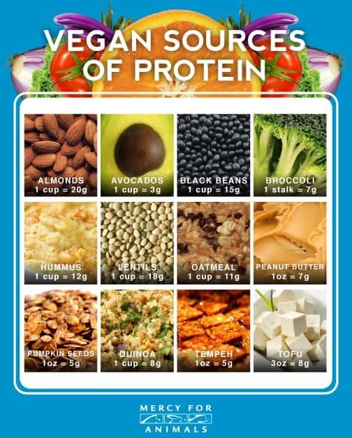 best vegan protein sources complete protein