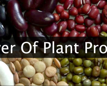 reasons plant protein is better than animal protein 370x297 - 10 Reasons Plant Protein Is Better Than Animal Protein